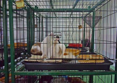 cats-hotel-(7)